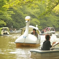 People riding row boats and swan-like paddle boats on the Inokashira Pond.