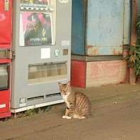 This poor kitty in Tamagawa was sitting next to a vending machine when I found her.